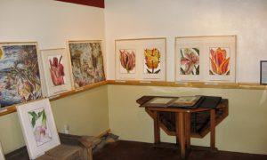 Black Swan Editions Gallery
